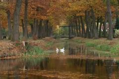 1002 - Op de kom bij van Bommel. Griendtsveen oktober 2005.JPG