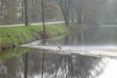 1015 - Reiger in Helenaveenskanaal 2006.jpg
